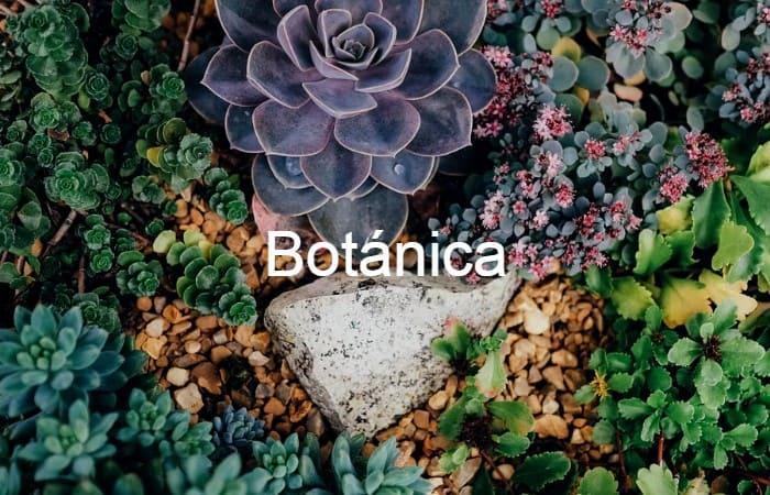 Imagen de Botánica