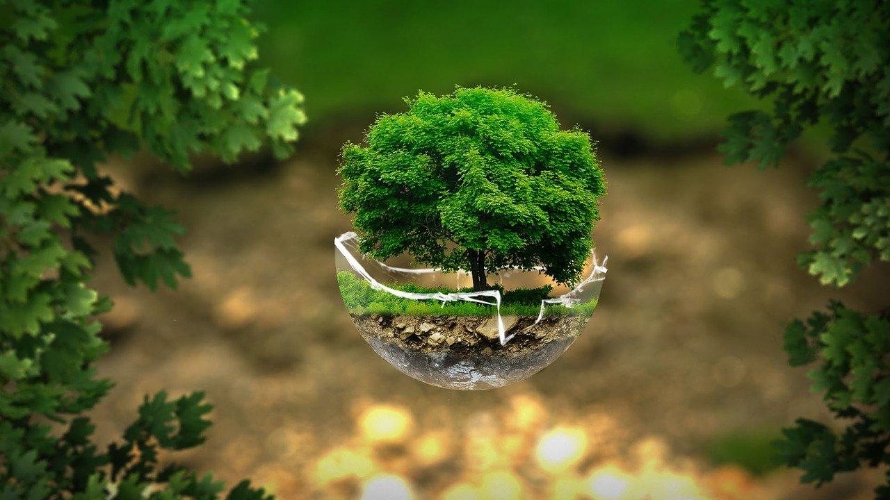curso de cultura ambiental